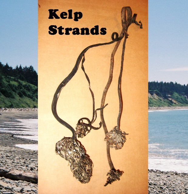Kelp Strands up to 3 FT. approx 30 strands